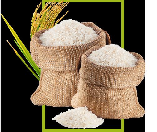 bhd-3-rice.png