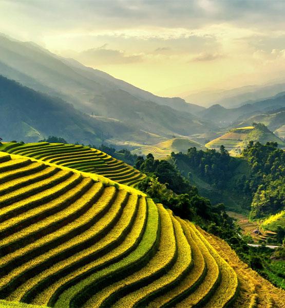 fields-rice-curved.jpg