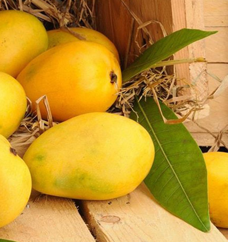 The Finest Quality of Mangoes Produced in Pakistan